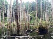 溪頭忘憂森林之旅:IMG_3333.jpg