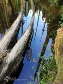 溪頭忘憂森林之旅:IMG_3352.jpg
