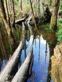 溪頭忘憂森林之旅:IMG_3355.jpg