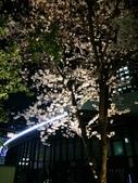 2015赤坂夜櫻:IMG_1947.jpg