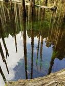 溪頭忘憂森林之旅:IMG_3353.jpg