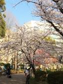 2015春櫻上野不忍池:IMG_2123.jpg