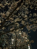 2015赤坂夜櫻:IMG_1948.jpg