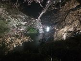 千鳥之淵夜櫻+靖國神社:IMG_1552.JPG