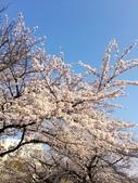 2015春櫻上野不忍池:IMG_2138.jpg