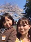 小田原城櫻花:IMG_2029.JPG