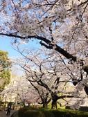 2015春櫻上野不忍池:IMG_2124.jpg