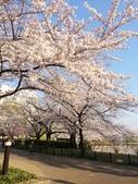 2015春櫻上野不忍池:IMG_2136.jpg