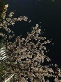 2015赤坂夜櫻:IMG_1937.jpg