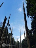 溪頭忘憂森林之旅:IMG_3356.jpg