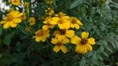 我的花園:zzDSC06810.JPG