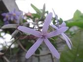 我的花園:zz2011-5-3 (19).JPG