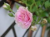 我的花園:zzDSC00978.JPG