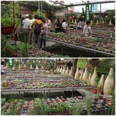 台北花卉村:25.jpg