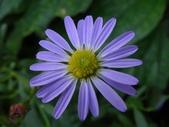 紫色花:14DSC02359 (2).JPG