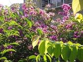 我的花園:zza1 (55).JPG