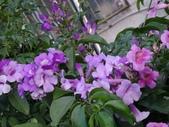 紫色花:1-2.JPG