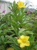 我的花園:97.8.8 133.jpg