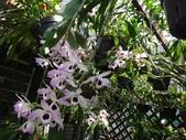 我的花園:zzDSC09269.JPG