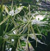 我的花園:47688174_2192642084101492_2591195211816239104_n-crop.jpg