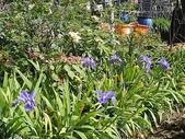 grace花菜園:ccDSC00180.JPG