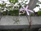 我的花園:zz2011-5-3 (16).JPG