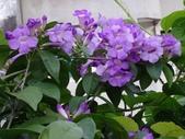 紫色花:1.JPG