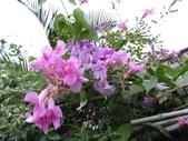 紫色花:2.JPG