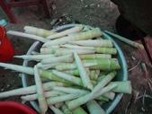 關西採竹筍:ZZDSC03352.JPG