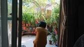 小花園裡蝴蝶好忙....:cccDSC_5774.JPG