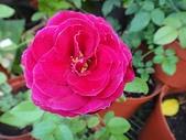 我的花園:zz王子 (7).JPG