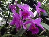 紫色花:11DSC06842.JPG