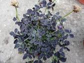 我的花園:AADSC05178.JPG