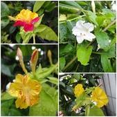 我的花園:aa5.jpg