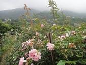 grace的玫瑰花開:zz2011-5-2grace 花園 (170).JPG