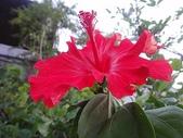 我的花園:zzDSC00009.JPG
