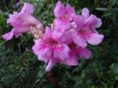 紫色花:2-2.JPG