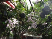 我的花園:zzDSC09266.JPG