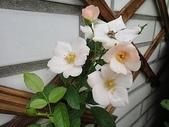我的花園:zz鱈魚角 (1).JPG