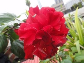 我的花園:zzDSC00007 (2).JPG