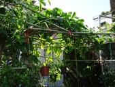 我的花園:6.JPG