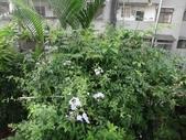 我的花園:24DSC00760.JPG