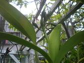 我的花園:97.8.8 085.jpg