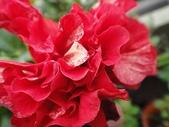 我的花園:zzDSC00006 (3).JPG