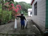 關西採竹筍:ZZDSC03318.JPG