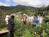 grace花菜園:ccDSC00181.JPG