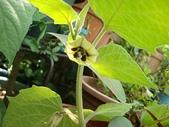 我的花園:aaDSC01784.JPG