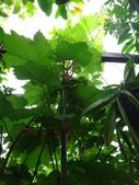 我的花園:26DSC00771.JPG