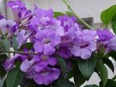 紫色花:1-1.JPG