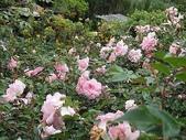 grace的玫瑰花開:zz2011-5-2grace 花園 (165).JPG